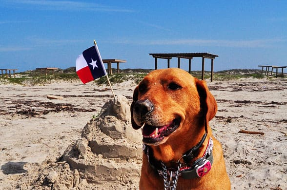 Mustang Island State Park dog friendly