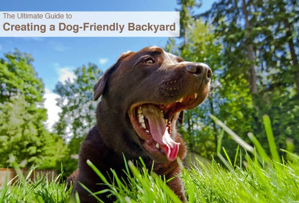 Guide-to-creating-a-dog-friendly-backyard