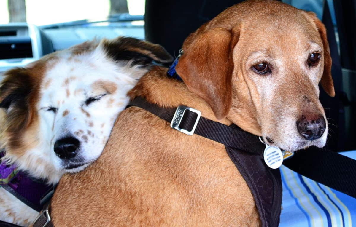 12 Tips for Traveling with Your Dog in Extreme Heat