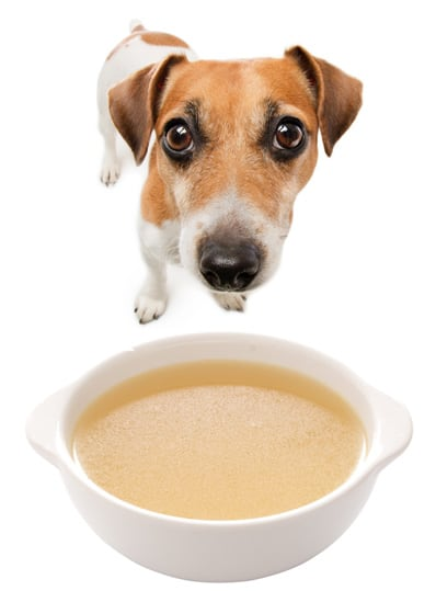 Homemade Chicken Broth for Your Dog