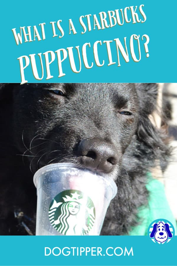 Puppuccino from Starbucks