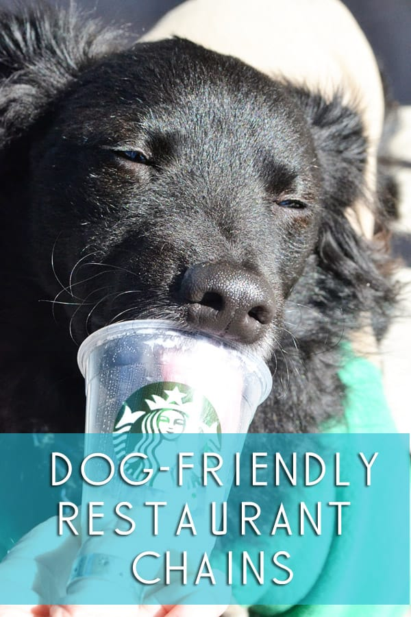 dog friendly restaurant chains