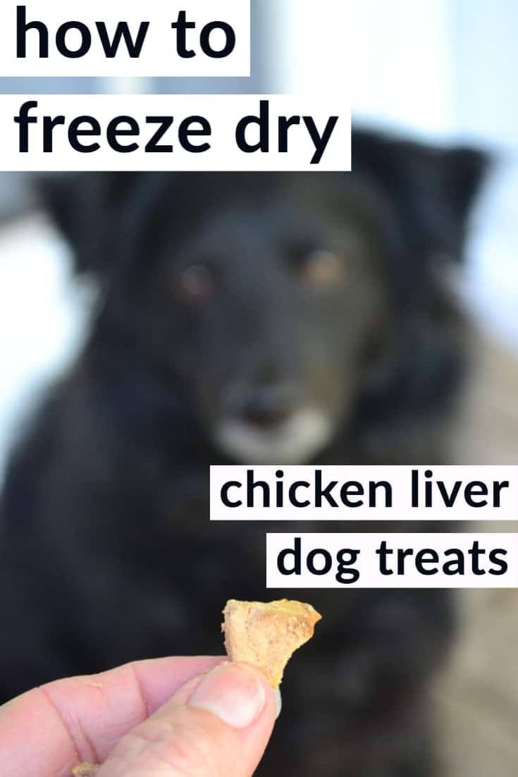 how to freeze dry chicken liver dog treats