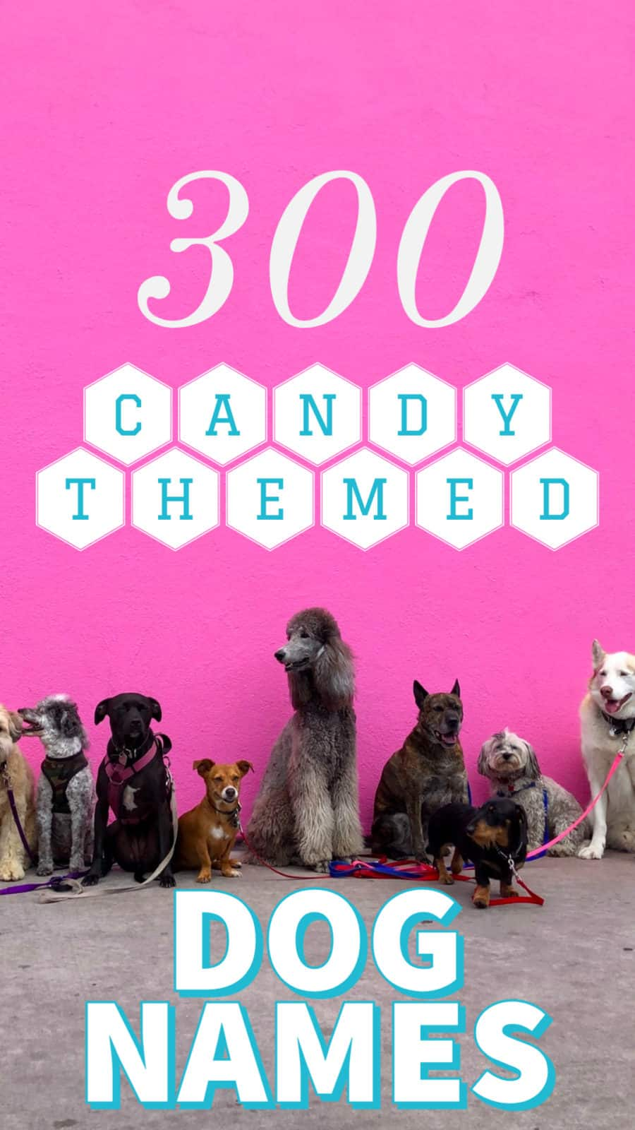 candy dog names