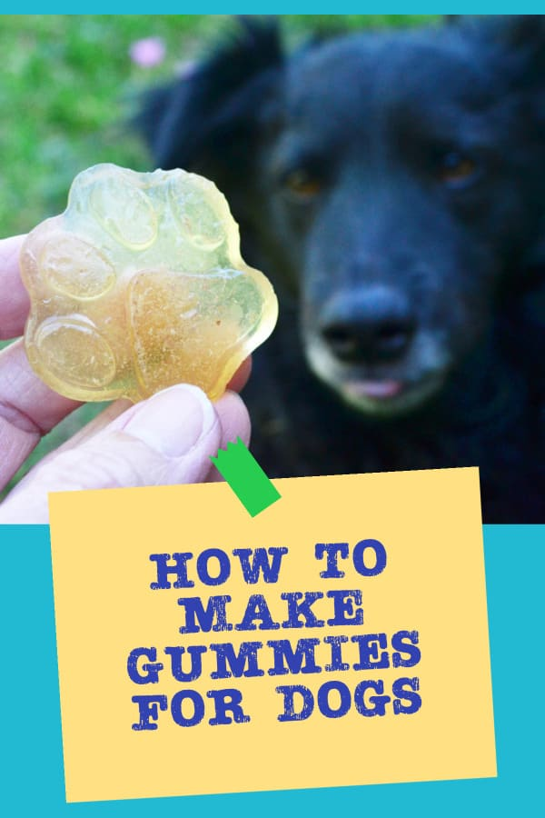 how to make gummies for dogs